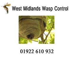 West Midlands Wasp Control